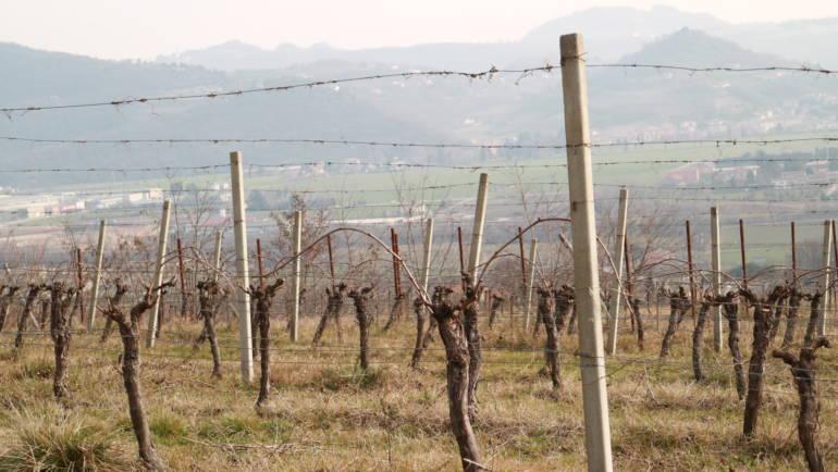 Vino Biodinamico, Tenuta dalle Ore (Trissino, Vicenza)
